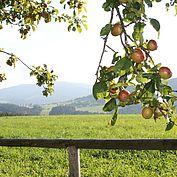 Apfelbluete - © TV Joglland Waldheimat