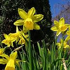 Frühling im Stodertal