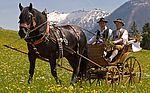 Pferdekutschengala