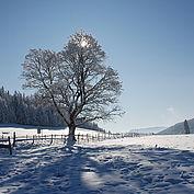 © TVB Almenland, Foto Berghofer, Wintersonne