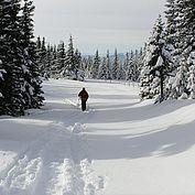 Winterwanderung © Joglland Waldheimat Zingl M.