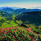 Almrosen Wiedersbergerhorn © Alpbachtal Seenland Tourismus
