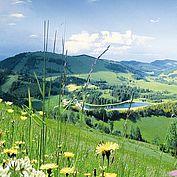 die Landschaft des Almenlandes
