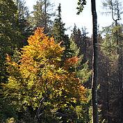 Herbstimpressionen Stodertal