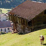 © Landhotel Tirolerhof/ Thomas Trinkl - Landschaft im Sommer