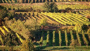 Wein aus Niederösterreich (c) Weinviertel Tourismus / Weiss
