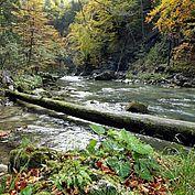 © Franz Wein - unterwegs im Naturpark Ötscher Tormaeuer