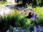 Blumenpracht - © Landhotel Eichingerbauer