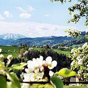 © Wein Franz - vom milden ins wilde Mostviertel