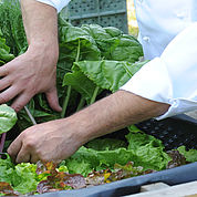 © Landhotel Gressenbauer - eigener Gemüsegarten