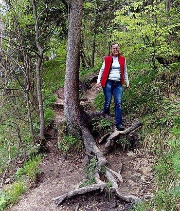 Gemütlicher Abstieg auf sanftem Wanderpfad durch den Wald