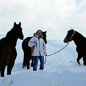 © Landhotel Schwaiger - Pferde im Schnee