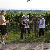 © Landhotel Birkenhof/ Helmreich - Walken durch die Weingaerten am Neusiedlersee