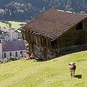 Landhotel Tirolerhof - bergabwerts