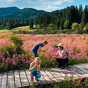 © Tourismusverband Naturpark Almenland Foto Bergmann - Fuehrung Teichalmmoor