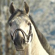 © Landhotel Strasserwirt - glueckliche Pferde