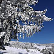 Winterimpression3 © Joglland Waldheimat Zingl M.